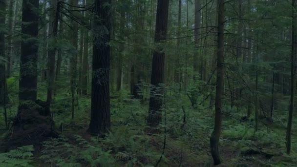 Večer přesun nad lesní