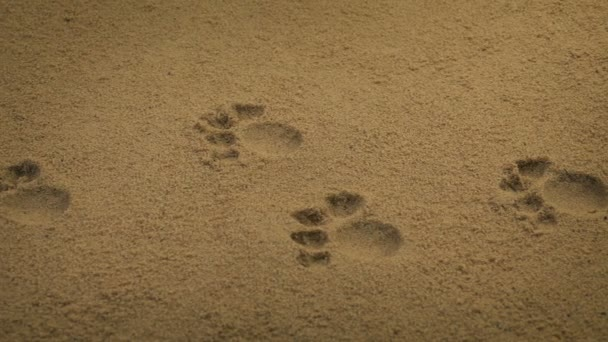 Passing Animal Paw Prints In The Sand