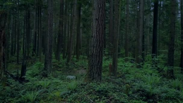 Létání se vzrostlými stromy v lese za soumraku
