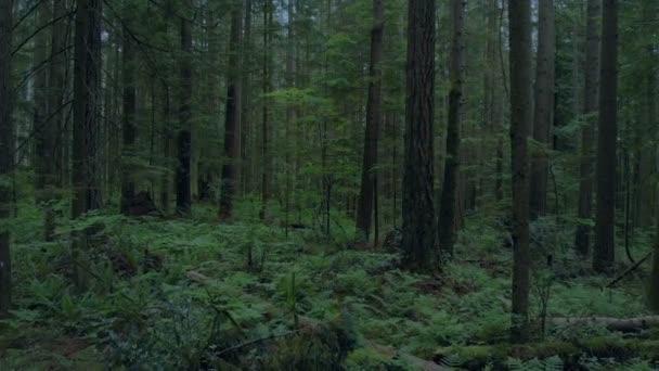 Pomalu se hustým lesem v večer