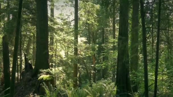 Mozog lefelé a földre, buja nyári erdőben