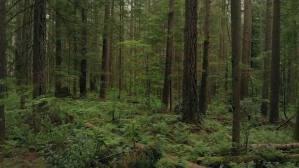 Létající hustým lesem stromy a kapradí