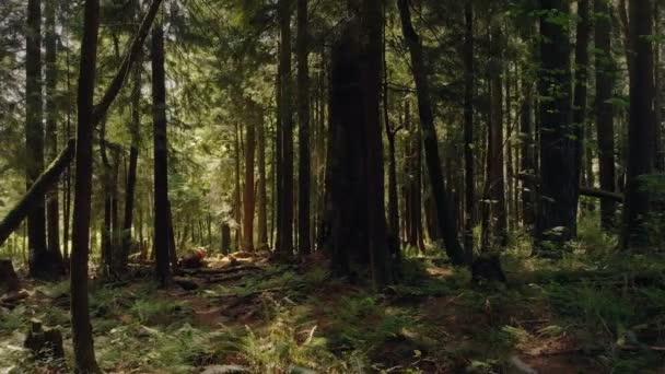 Přechod ze strany lesem krásné léto