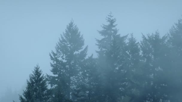 Forest Trees In Thick Mist