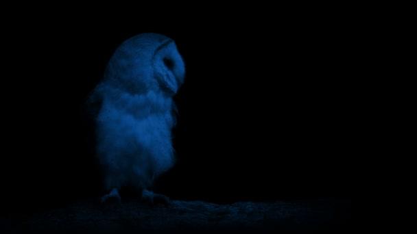 Gufo nel buio
