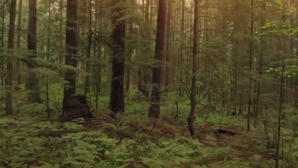 Erdei fák közeledik a naplemente