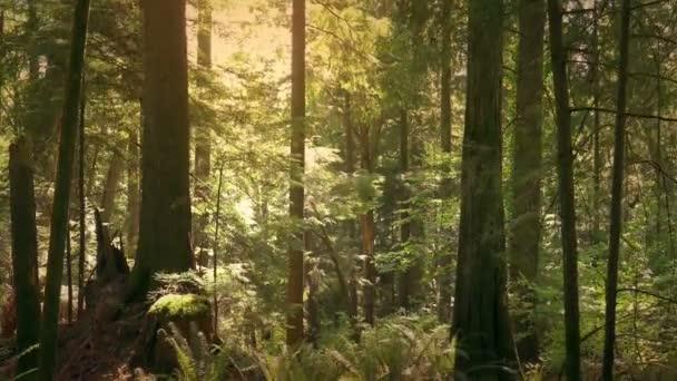 Plovoucí podlahu lesa při západu slunce