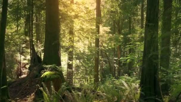 Pohybující se po lese při západu slunce