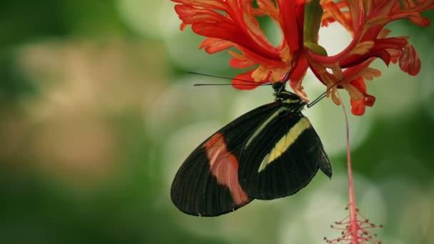 Motýl na květu mělké zaměření
