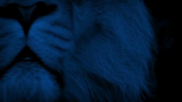 Oroszlán száját üvölt éjjel
