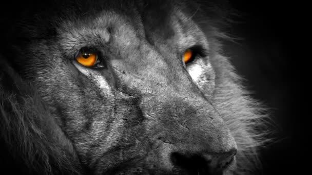 Lev s abstraktní oranžové oči