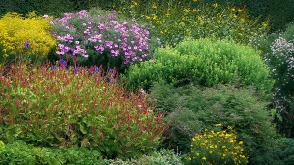 schöne Gartenpflanzen und Blumen