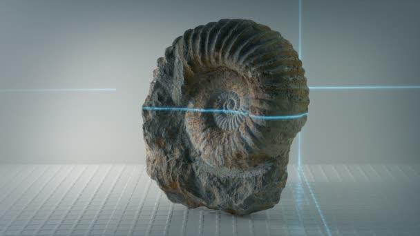 Ammonite prastarého krunýře fosilních skenované