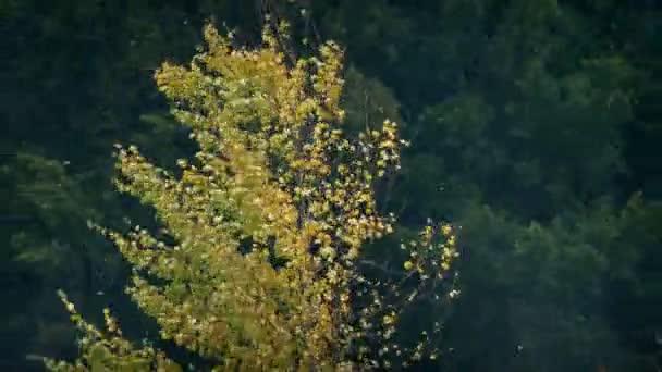 Strom, opad listů v zimě bouře