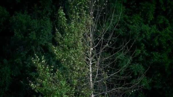 Színváltó fa nyári, őszi