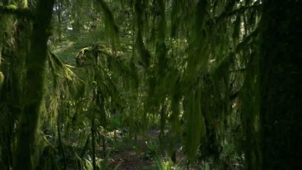 Spaziergang unter hängendem Moos an altem Baum