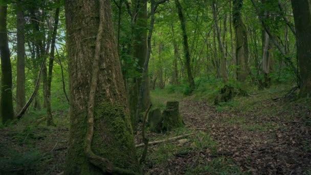 Cesta venkovského lesa stěhování