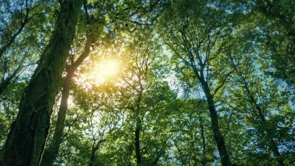 Slunce září skrz zákryt stromu
