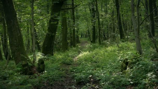 Slunce svítí pěkné lesní glade
