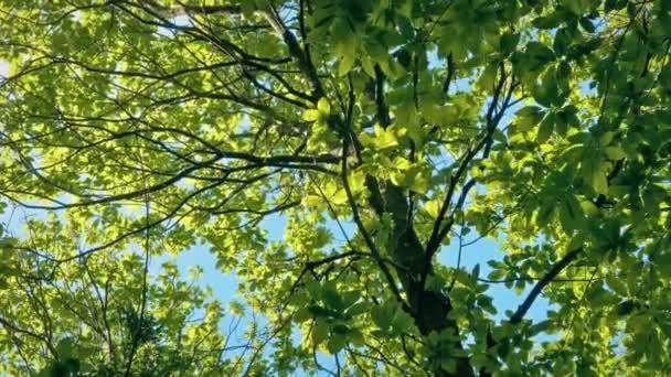 Stromový vrchol zářící na perfektním slunném dnu
