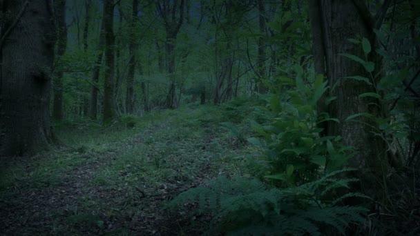 Woodland a Alkonyat mozgó shot