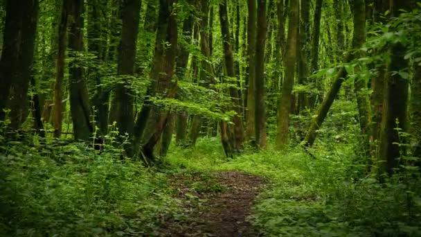 Přesun nad malebnou cestou v lese