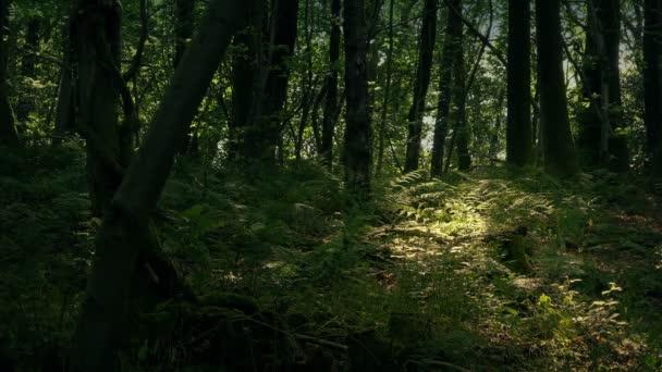V. besütött a mély erdőben