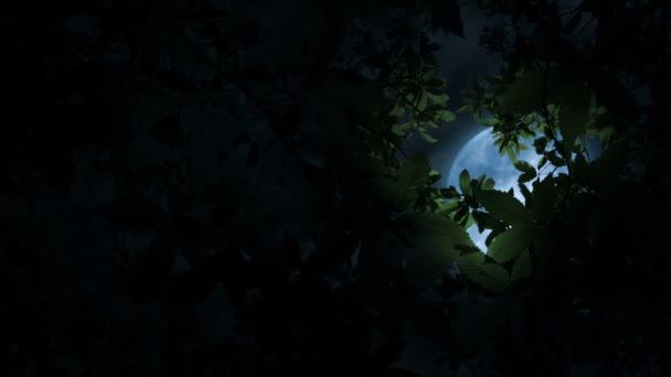 Moon Illuminates Tree Branches