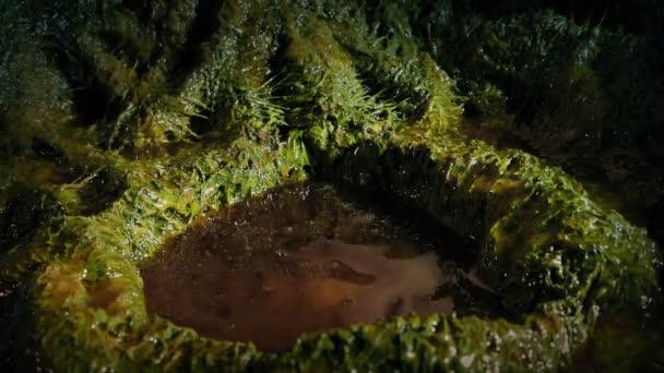 Hand Breaks Slimy Alien Cocoon Stock Video C Fyrestock 286632090