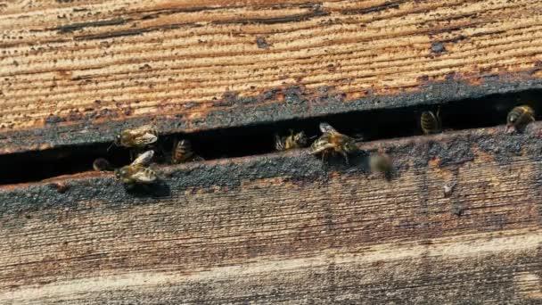 Honigbienen gehen im Stock ein und aus