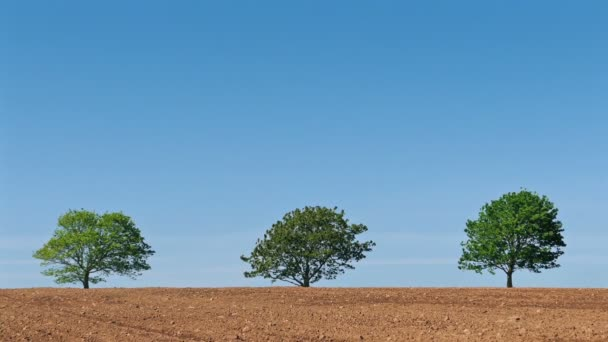 Trees On The Horizon In Field