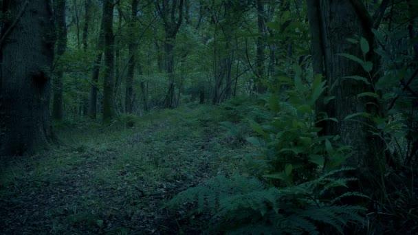 Cesta lesem ve večerních hodinách