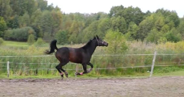 Kůň tryskem na louce