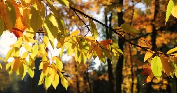 A közeli erdő őszi lombozat
