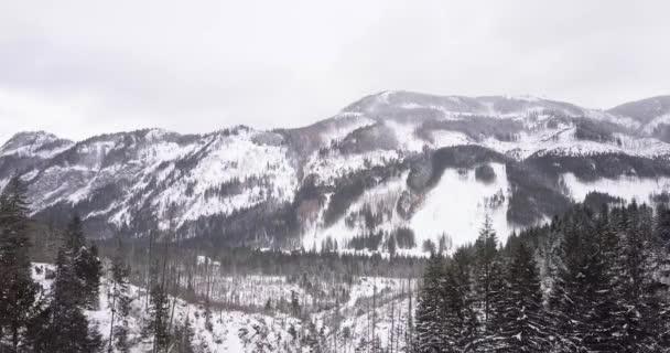 Letecká: zimní les v Tatrasské pohoří