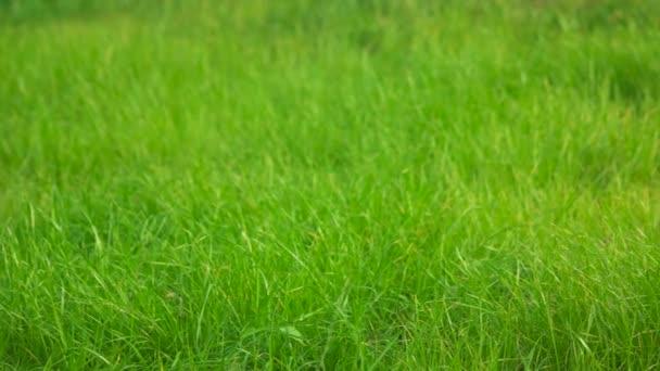 zblízka trávy