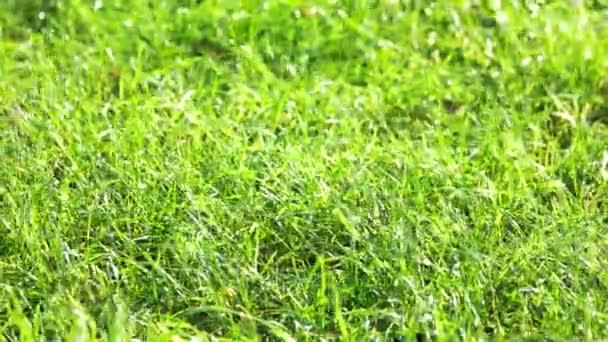 Green grass motion.