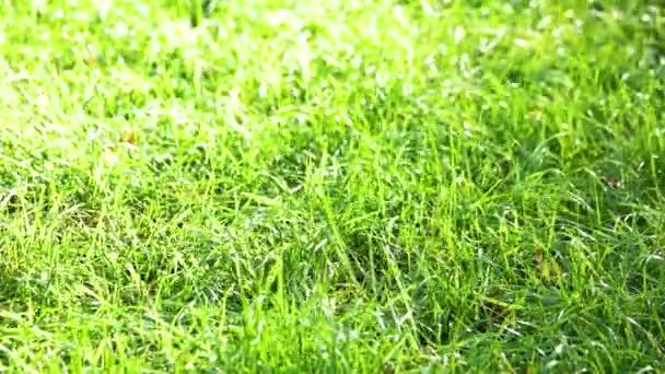 zöld fű háttér textúra.