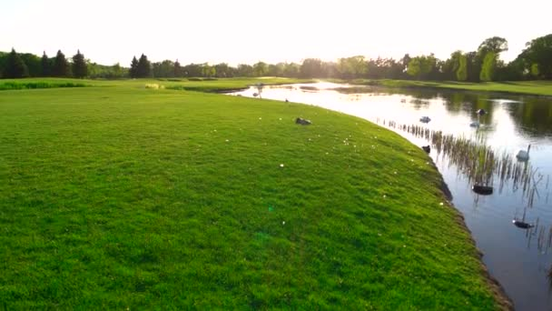 Zelený trávník a jezero s labutěmi