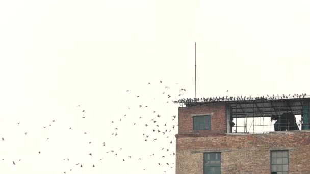 Group of pigeon gathered on rooftop.