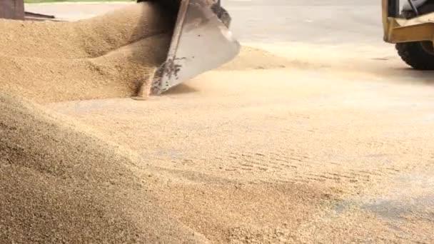 Načítání kukuřice v lopatou.