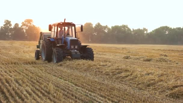 Tractor is harvesting field with straw.