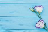 Lisianthus eustoma květiny na dřevo s copyspace.