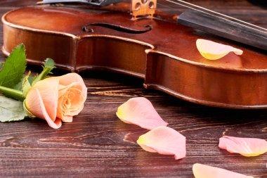 Old violin and pink petals of rose.