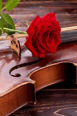 Red rose on old violin, vertical image.