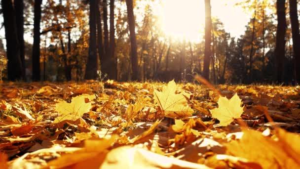 Herbstlandschaft im Stadtpark.