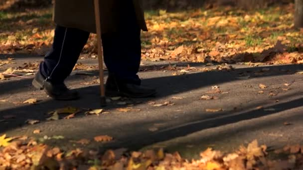 Old man walking with stick in autumn park.