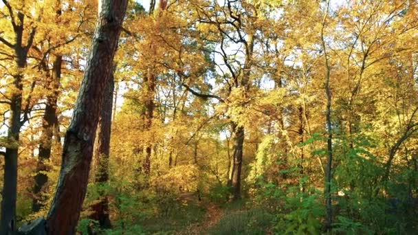 Yellow autumn trees at forest.
