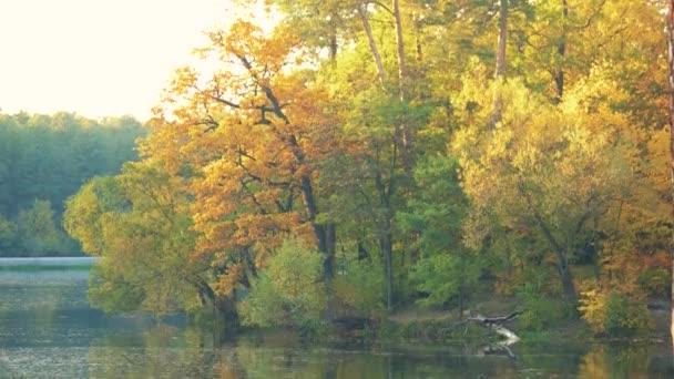 Krásná podzimní les poblíž jezera