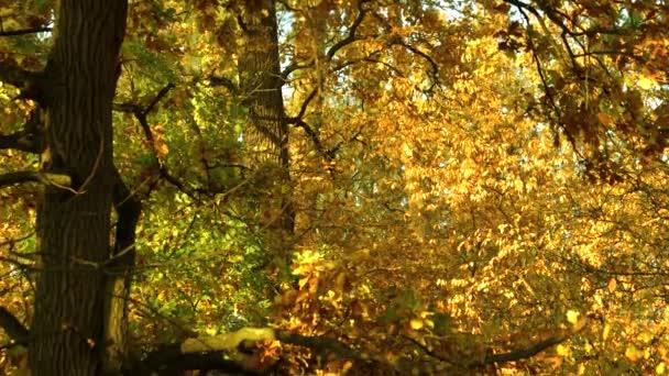 Stromy v lese s barevnými listy. Podzimní barevné listí. Slunce prosvítající mezi stromy. Krásy přírody na podzim.